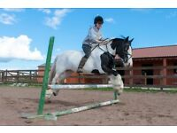 AMAZING 14HH COB FOR PART LOAN