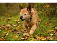 Dog walking and pet photography! Friendly service with 3 years experience and fully insured!