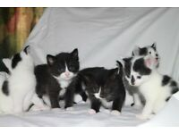 6 x Beautiful Kittens For Sale - ALL SOLD