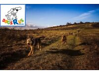Dog walker; dog walking 8am - 6pm all ages & sizes; one hour plus; dog training; certified & insured