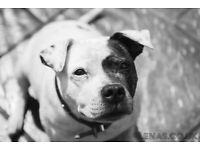 Pet / Equine Photographer
