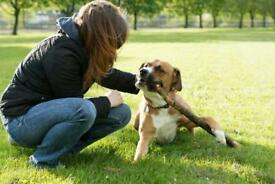 Dog Walker Milton Keynes Bletchley