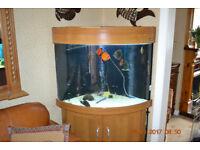 Aqua One windor 66 corner aquarium