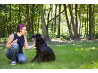Dog Walking, Dog Daycare & Pet Sitting in Haringey