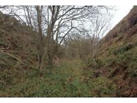 Wanted small plot of land to form a woodland and encourage wildlife. Quirkier better! Must be cheap