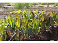 Culinary Gardener on 5-star Estate in Tuscany