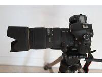 Used Canon 7D camera body,
