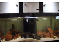 5x2x2 acyrlic tank with wier and sump