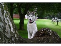 Walks with Dogs, Sherwood. Your best friend walked in complete safety off-road. From £10
