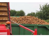 Tractor Drivers Required For Potato & Onion Harvest Work