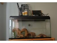 Reptile tank including all internal accessories, cricket feeder, other.