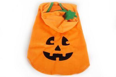 - Hund Pumpkin Kostüme