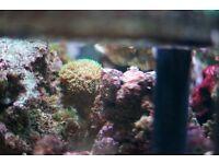 fiji live rock grade A marine fish tank