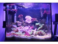 Marine Fish Tank Complete Setup