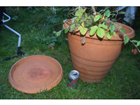 large terracotta plant pot with saucer and alpine strawberries plant £10 cb1