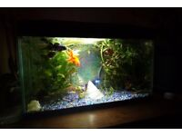 Fish tank 54 litres with new led bulb