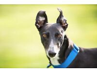RIVERSIDE DOGS / Pet Photography, Canines with Character - Pooches with Personality.
