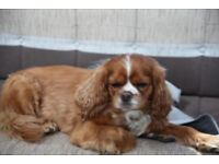 Doggie Day Care and Boarding London N3