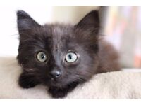 Beautiful, affectionate cat for a good home.