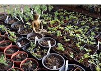 Herbs Going Cheap £1.00 each.