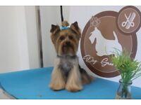 Professional Dog Grooming Peterborough