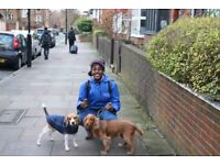 Dalston dog walkers! We are friendly and professional