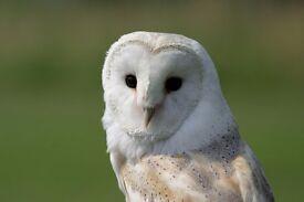 Local Fundraiser (Wildlife Charity) Paid Position: £7.60 ph +bonuses, Part-Time - Temp. or Perm.