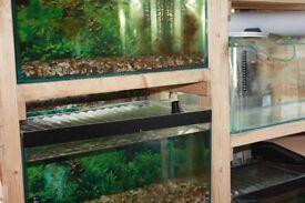Fish tanks on rack