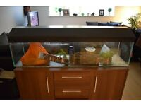 4FT FISH TANK, ACCESSORIES & FISH