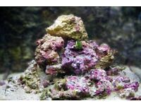Live Rock for Marine Aquarium Approx 10 kg