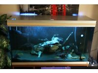Large fish tank with fish