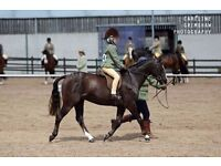 Creevelea Button Moon 11.2hh LR/FR hunter Pony