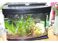 Interpet fishpod 64 Tropical Set Up
