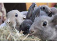 baby rabbits