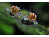 wonderful aquarium creatures for your tank