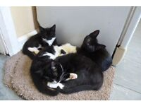 kittens for sale £10 chorlton m21