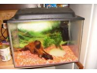Fishtank or Vivarium.
