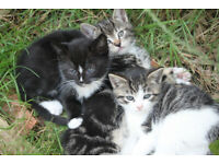 Beautiful Kittens for sale (available now!)
