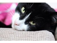 Alfie Cat - Free to loving home