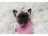 STUNNING KC REGISTERED FRENCH BULLDOG BABIES AVAILABLE