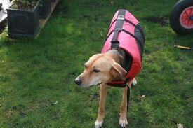 Dog Buoyancy Aid & Deck Bootees