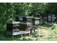 WANTED: Land for an Apiary - Honey Bees, Hives, Free Honey, Free Pollination