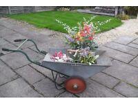 old galvanized wheelbarrow