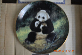 The Panda; Last of their kind: The Endangered Species Collector's Plate