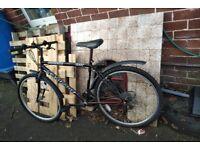 Adult black bike greenisland