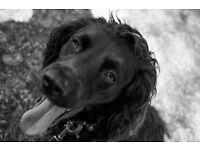 Pet photography. Experienced photographer capturing those lasting memories of your 4 legged friends.