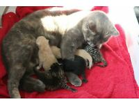 Adorable kittens.