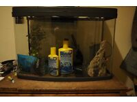 """Curved panoramic Aquarium 60"""" Fish Tank with a lot of extras"""
