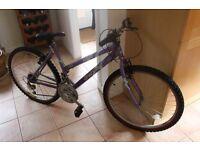 Ladies Charisma active bike