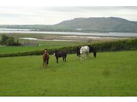 Livery stables near Kinross